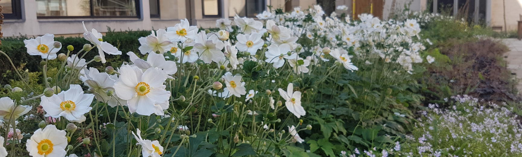Flowers in the West Quad