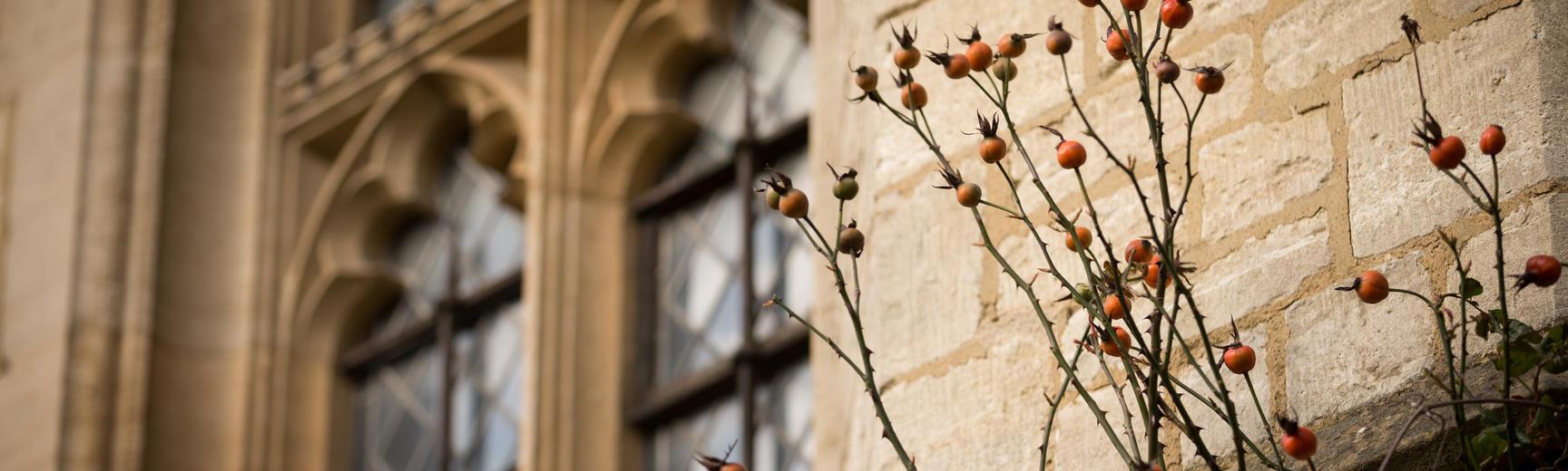 Pusey Chapel Window